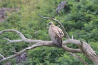 eagle bird wildlife pyrenees trek